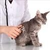Ветеринарные клиники в Горбатовке